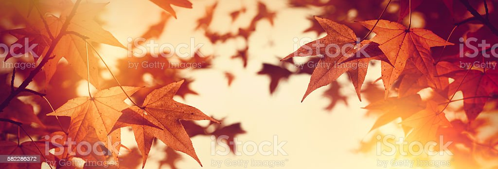 Treetop tree - autumn foliage, autumn leaves stock photo