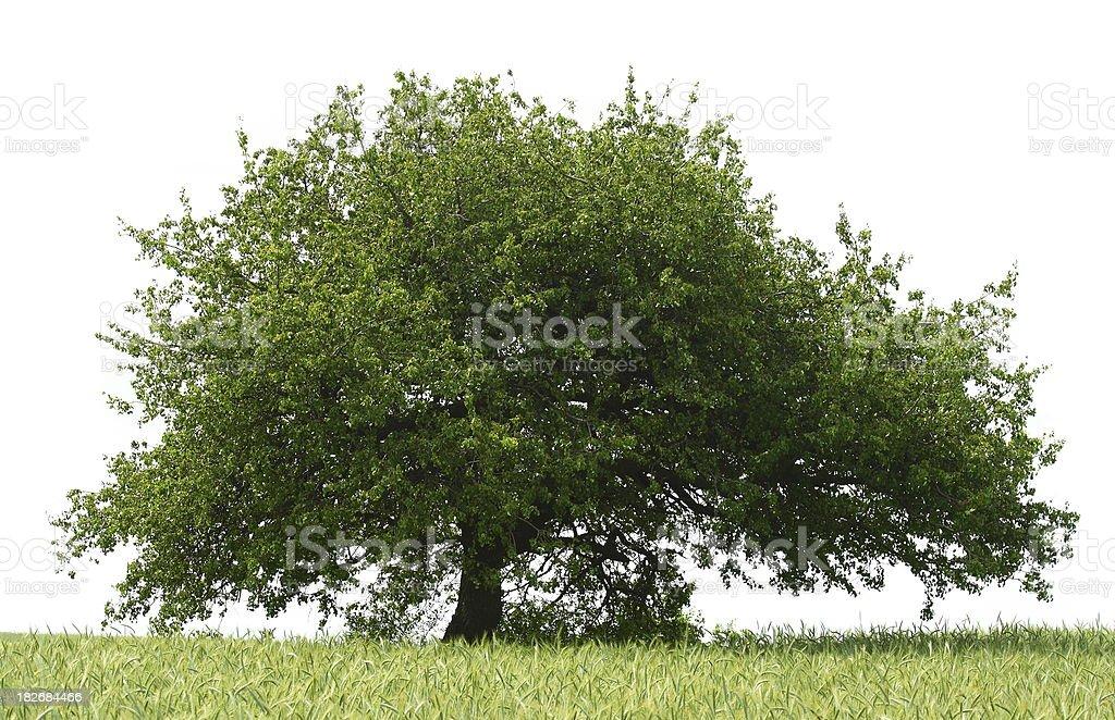 Treetop Tree royalty-free stock photo
