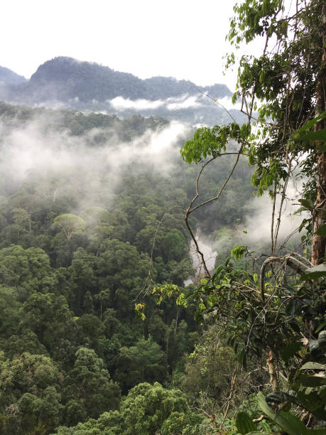 Treetop View of Primary Rainforest with Clouds in Danum Valley, Borneo stock photo