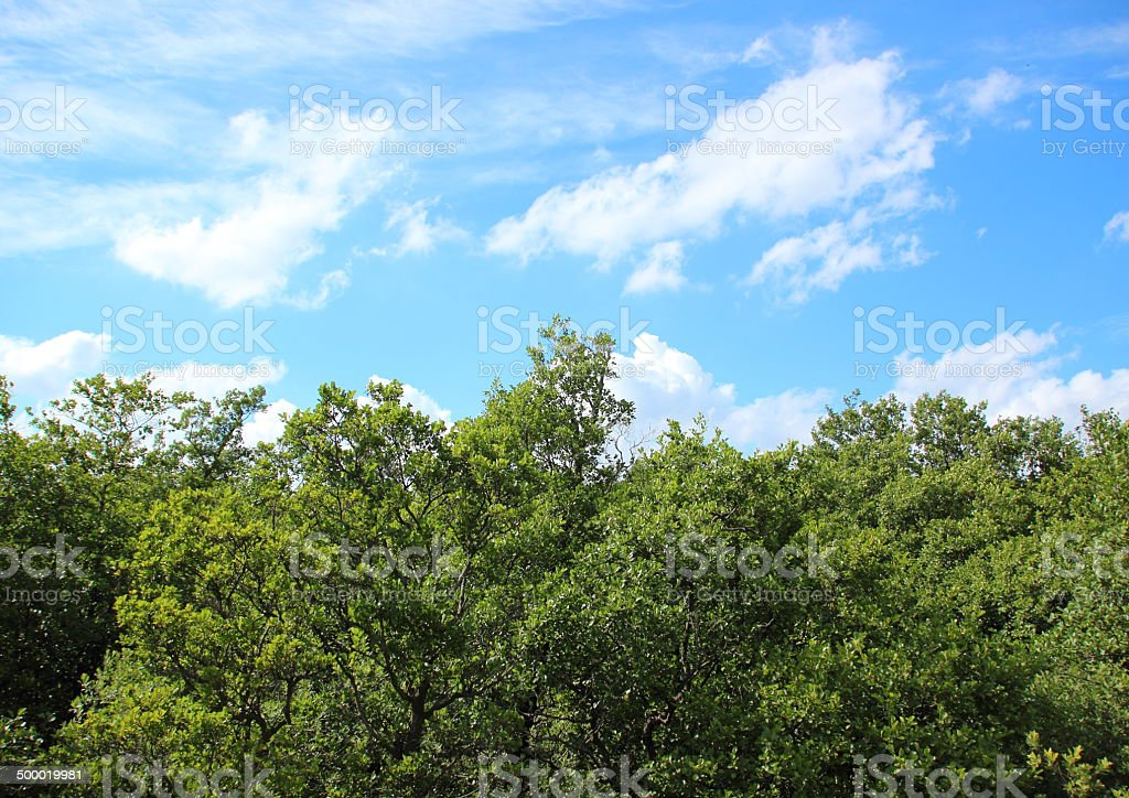 Treetop view with clouds and blue sky stock photo