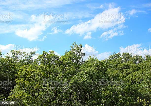 Photo of Treetop view with clouds and blue sky