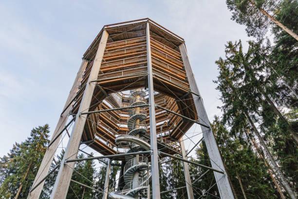 treetop walkway in lipno-stausee. steiges v korunách strom na lipn, - baumwipfelpfad stock-fotos und bilder