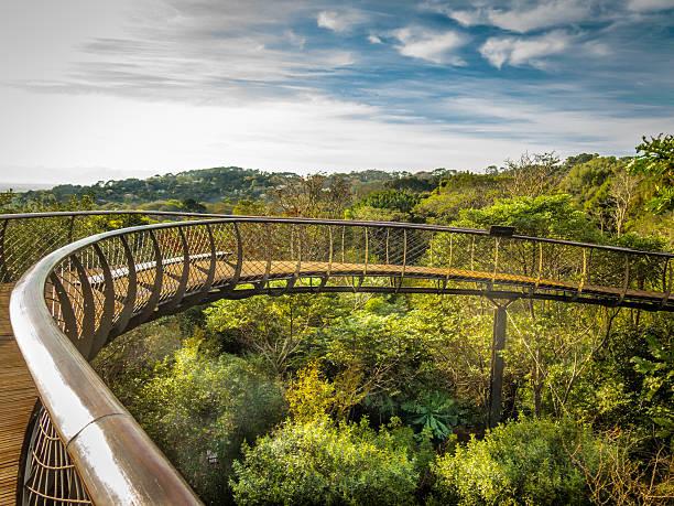 treetop-passage. botanischer garten kirstenbosch, südafrika - baumwipfelpfad stock-fotos und bilder