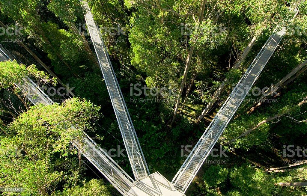Treetop Walkways stock photo