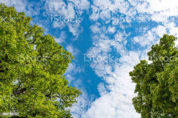 Photo of Treetops  and blue sky with white clouds