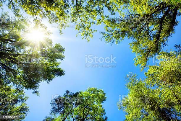 Photo of Treetops framing the sunny blue sky