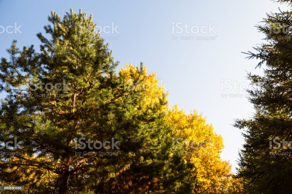 Treetops in Autumn stock photo