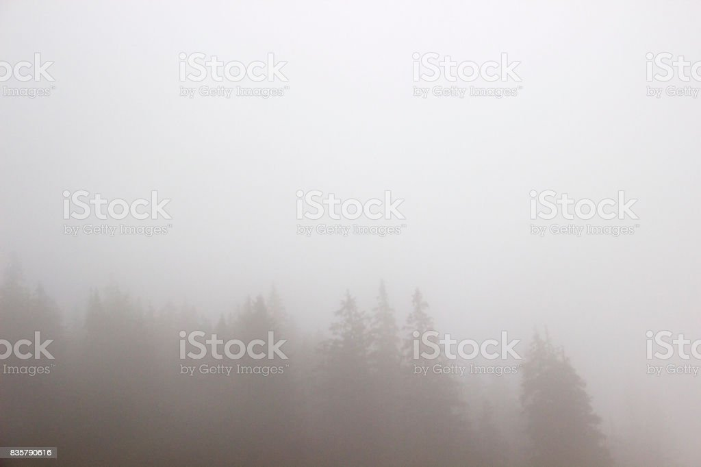 Treetops in the fog stock photo