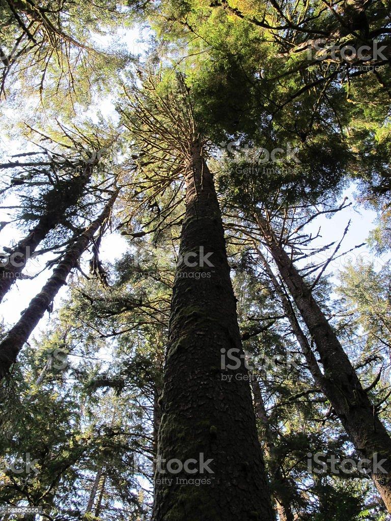 Treetops stock photo
