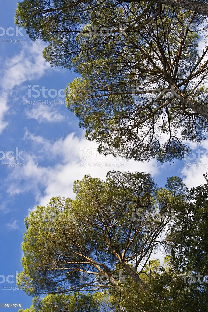 Treetops royalty-free stock photo