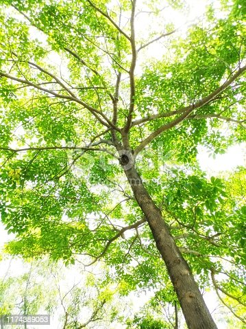 Tree, Sun, Forest, Plant, Woodland