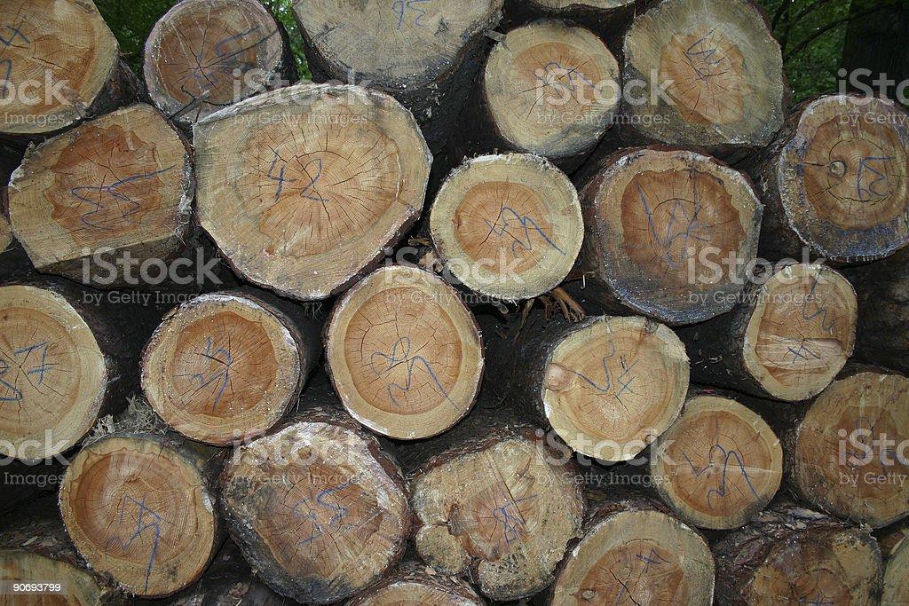 Treetrunks royalty-free stock photo