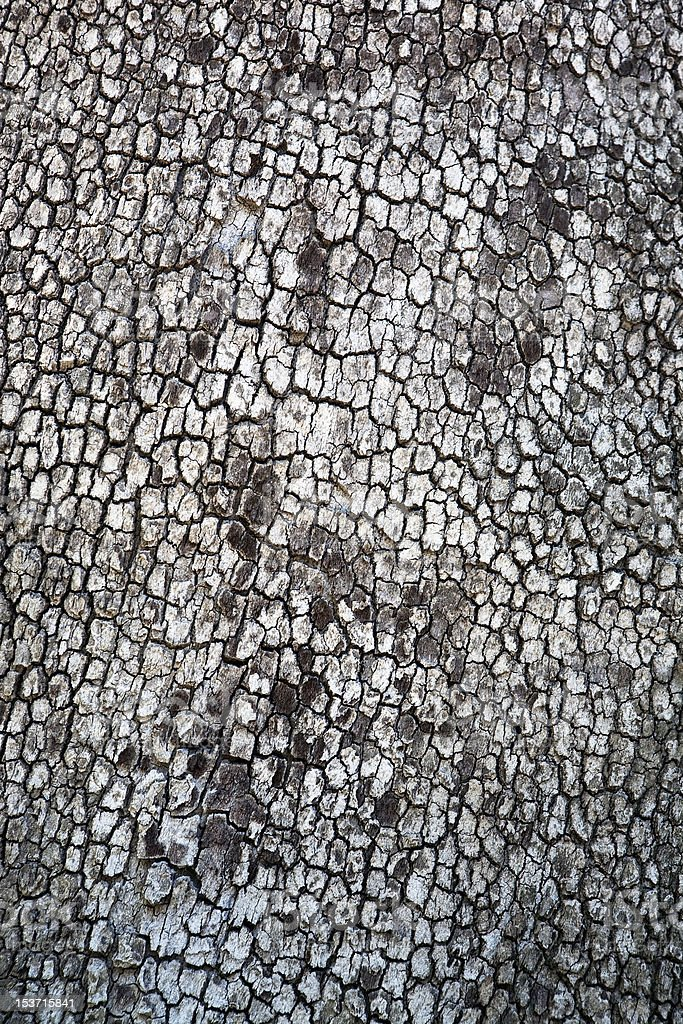 tree,wood royalty-free stock photo