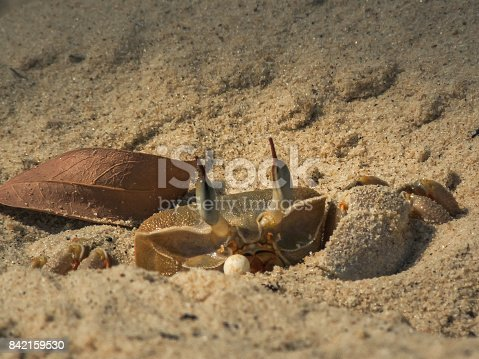 Crabs from the red sea in Sinai Egypt
