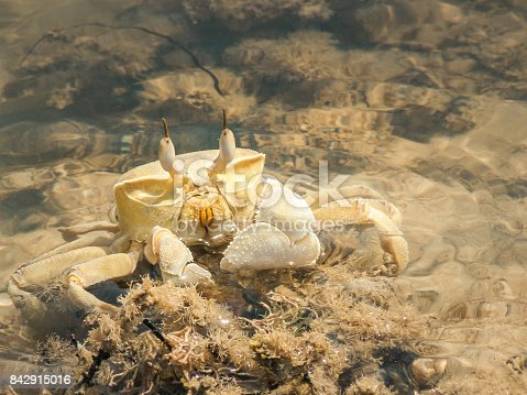 Crabs from the red sea in Sinai