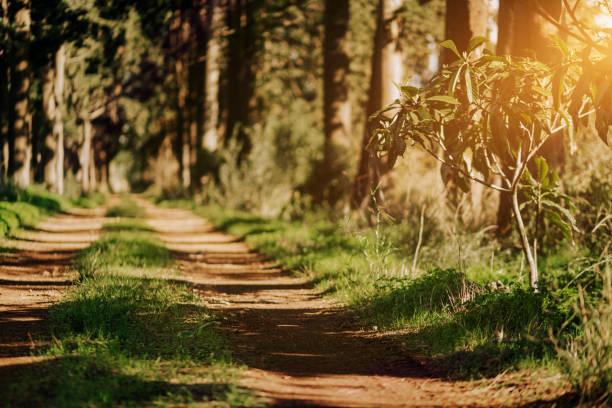 Trekking, Wald – Foto