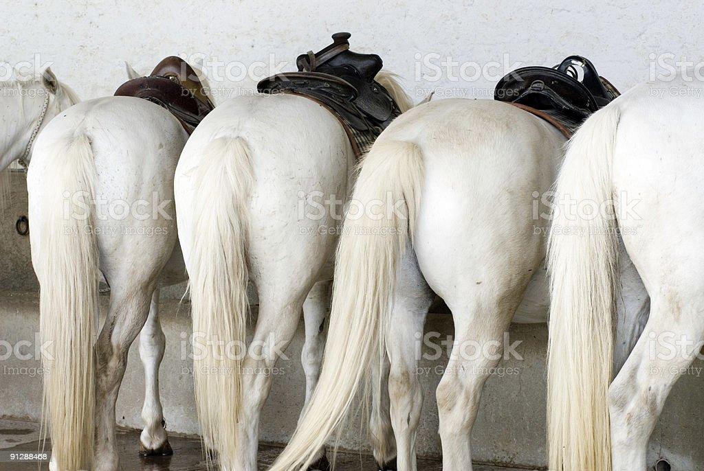 Trekking Ponies stock photo