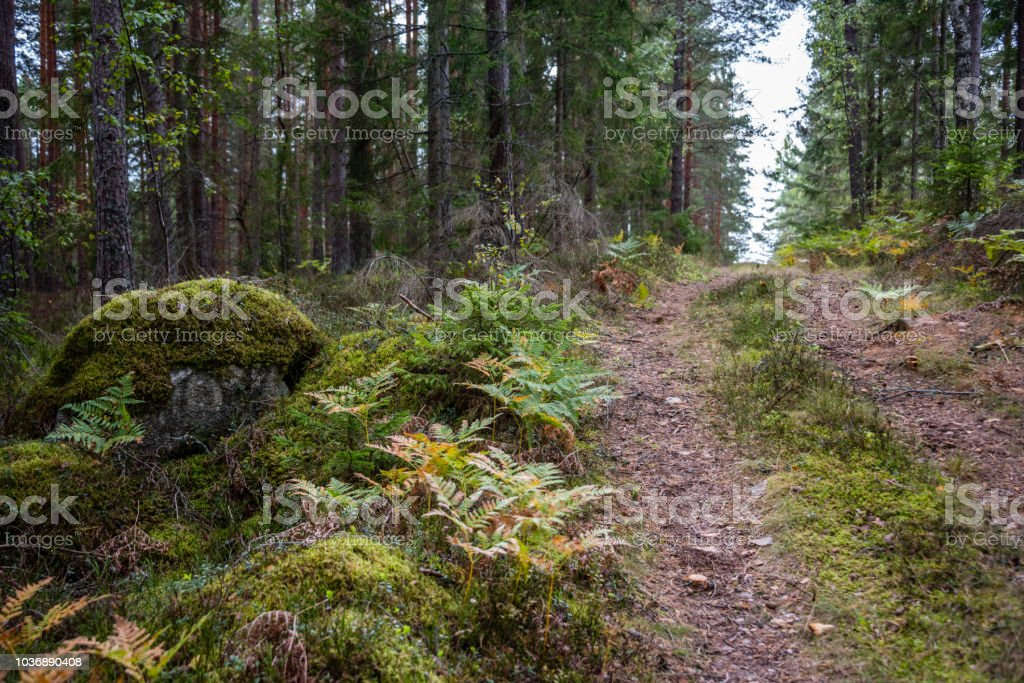 Trekking Trail in a Deep Green Forest in Northern Europe - foto stock