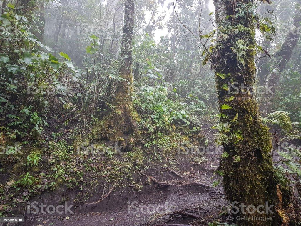 Trekking trail of  Acatenango volcano ,Guatemala - Photo