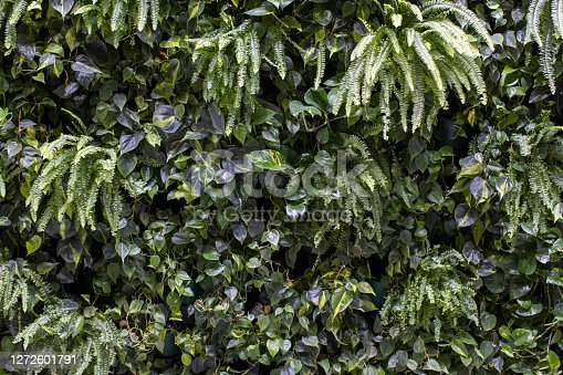 Trend biophilic design. Wall from plants, vertical garden,urban jungle, modern interior decoration. Concept eco decor of urban environment or private housing.