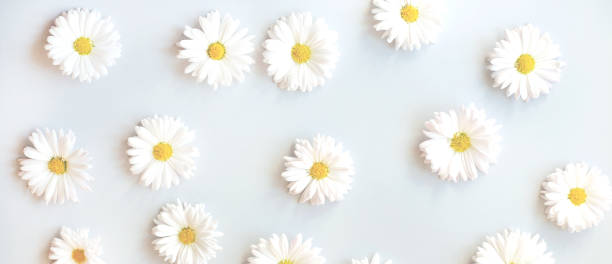 Trend flower pattern with daisies on a black background picture id1165361089?b=1&k=6&m=1165361089&s=612x612&w=0&h=r2mpeh5z715zcpd9gslo ov0pqxusngcwukwid0xp y=