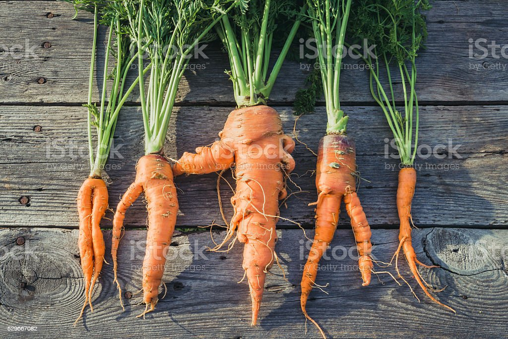 Trendy ugly organic  carrot stock photo