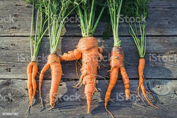 Trendy Ugly Organic Carrot Stock Photo - Download Image Now