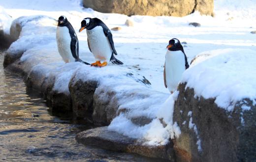 Scared penguins.