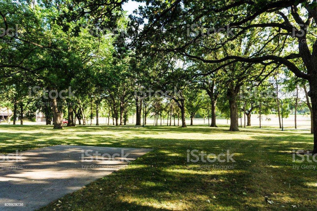Tress In Park stock photo