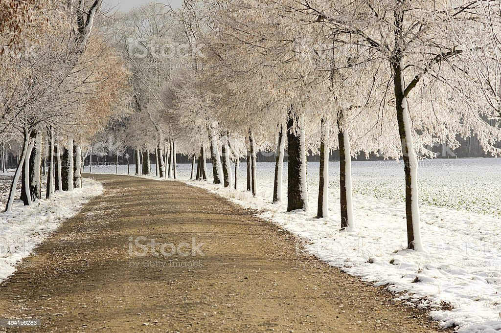 Tress with Ice Crystals in Sunlight stock photo