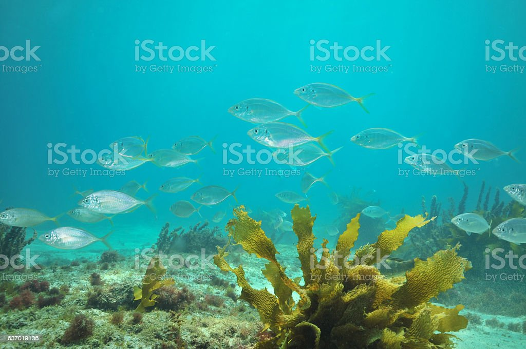 Trevally above sand stock photo