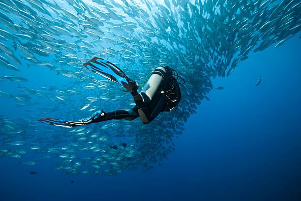Carangue à et plongeur - Photo
