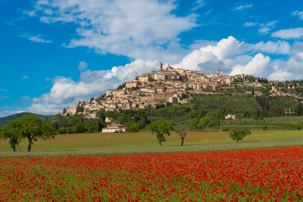 Trevi (Umbria, Italy) The awesome medieval town in Umbria region, central Italy, during the spring and flowering of poppies. umbria stock pictures, royalty-free photos & images