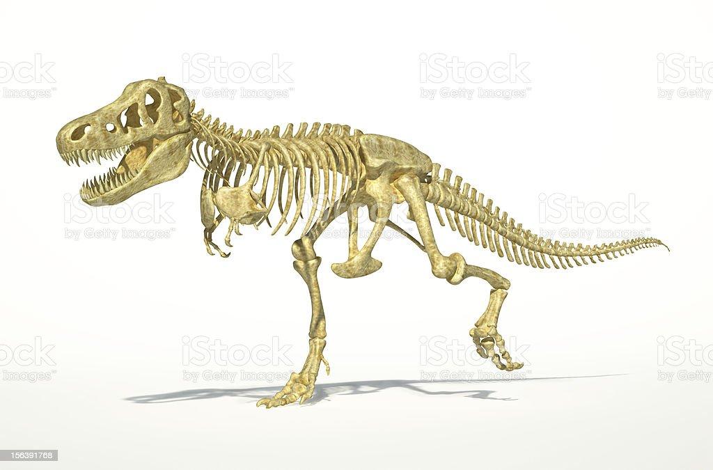 Fotografía de Trex Dinosaurio Esqueleto Completo Fotorealista y más ...