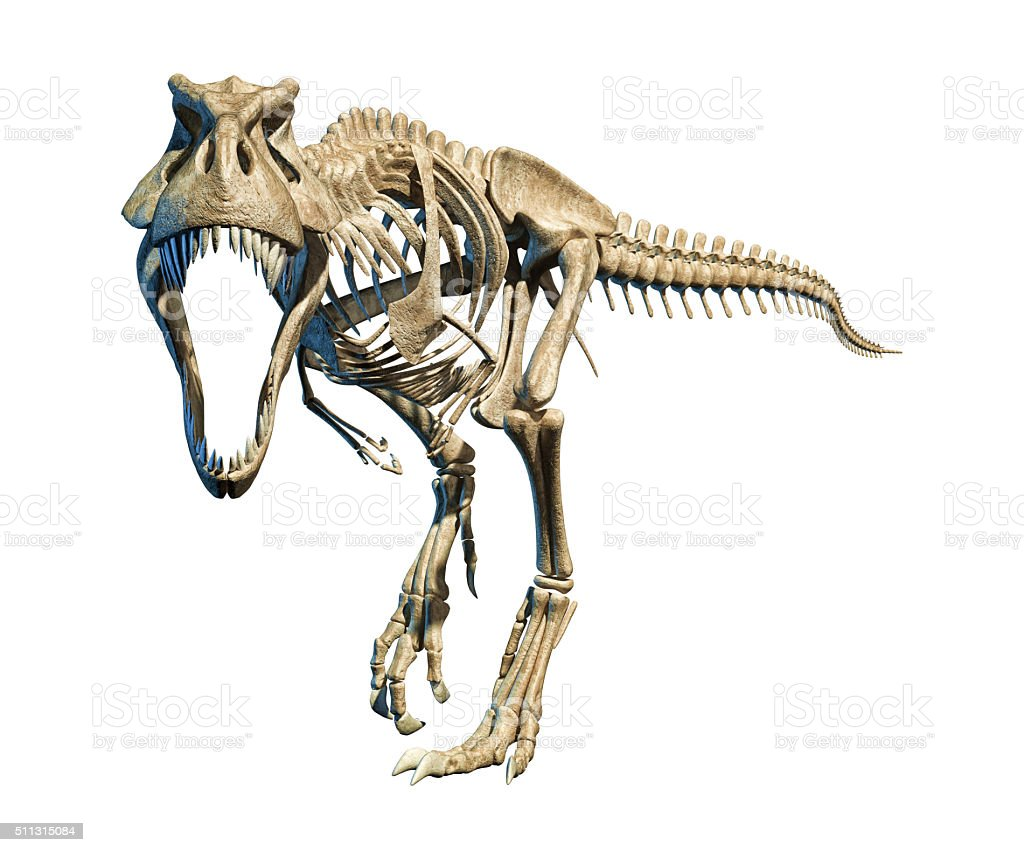 T-Rex photo-realistic full skeleton. Front view. stock photo