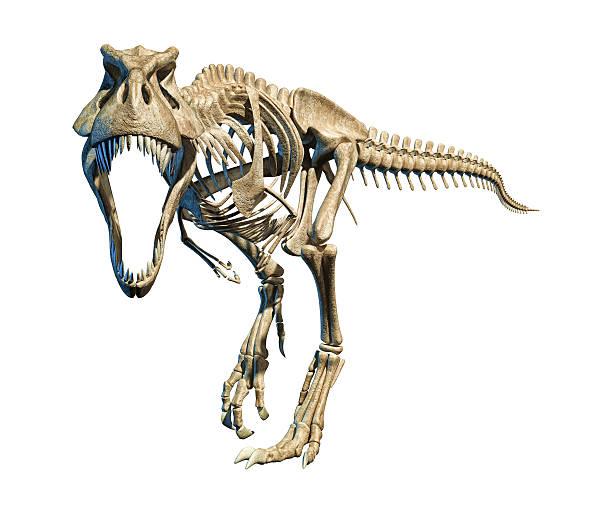 T-Rex photo-realistic full skeleton. Front view. stock photo
