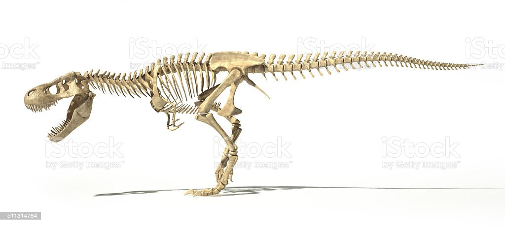 T-Rex photo-realistic full skeleton. Side view. stock photo