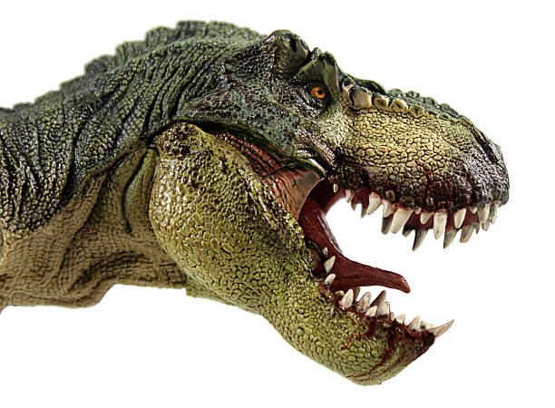 a t-rex profile photo with jaw agape - tyrannosaurus rex stock photos and pictures