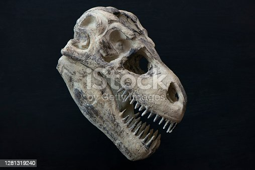 istock T-rex Skull 1281319240