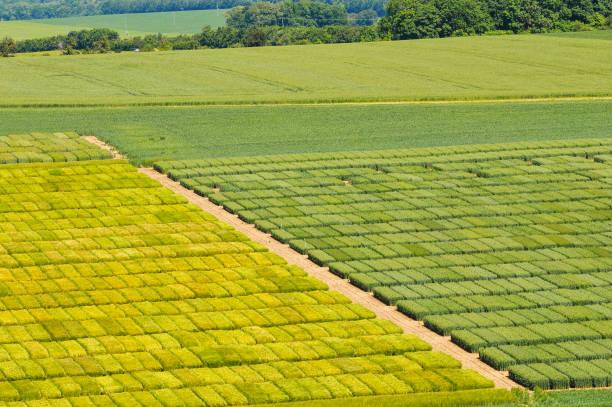 Versuchsfeld für Getreide von oben – Foto