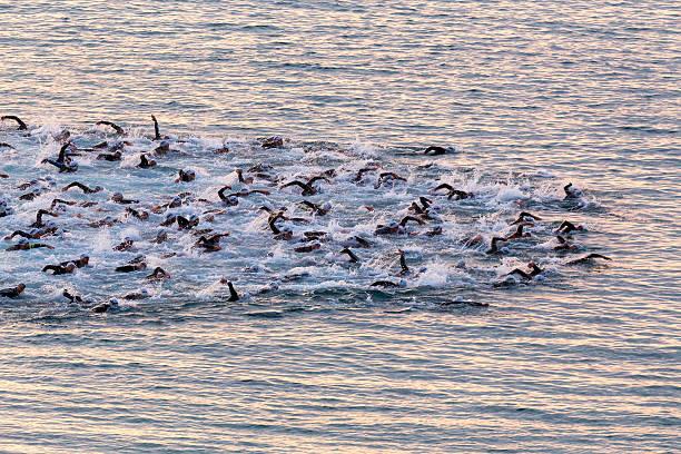 Triatletas nade en el inicio de la competencia Ironman - foto de stock