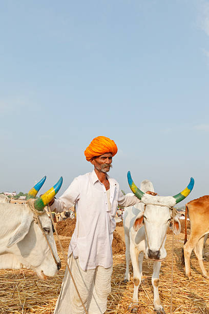 Tribal cattle seller at Pushkar fair India stock photo
