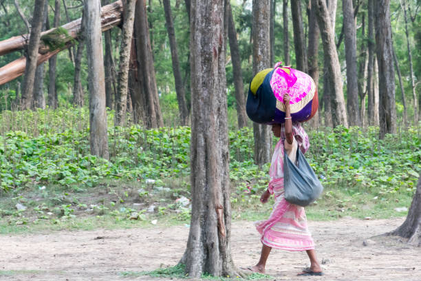 A tribal woman carry belongings on head, going to check her name on final list of National Register of Citizens office. NRC CAA CAB stripped many people from Indian citizenship. Assam India Sept 2019 A tribal woman carry belongings on head, going to check her name on final list of National Register of Citizens office. NRC CAACAB stripped many people from Indian citizenship. Assam India Sept 2019 migratory workers stock pictures, royalty-free photos & images