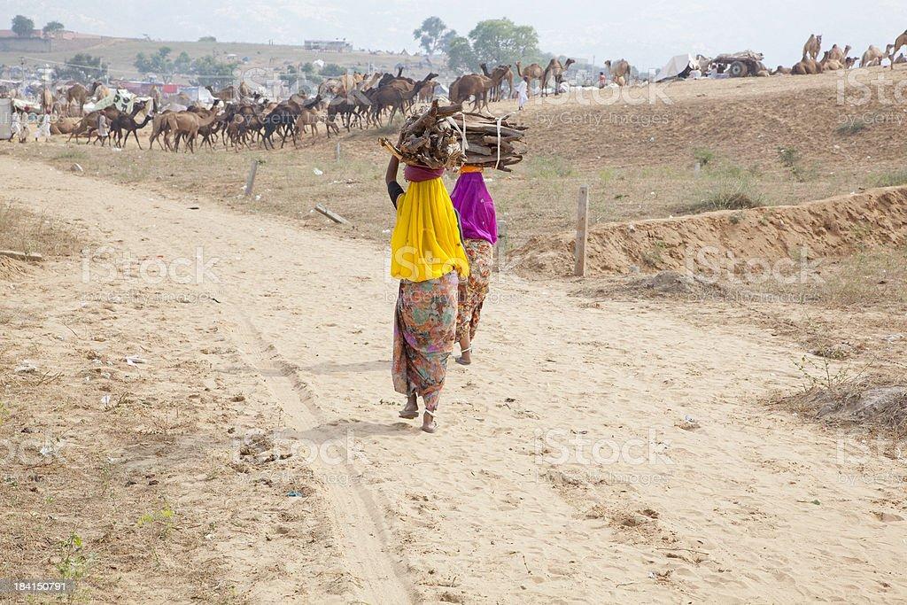 Tribal women carrying wood stock photo