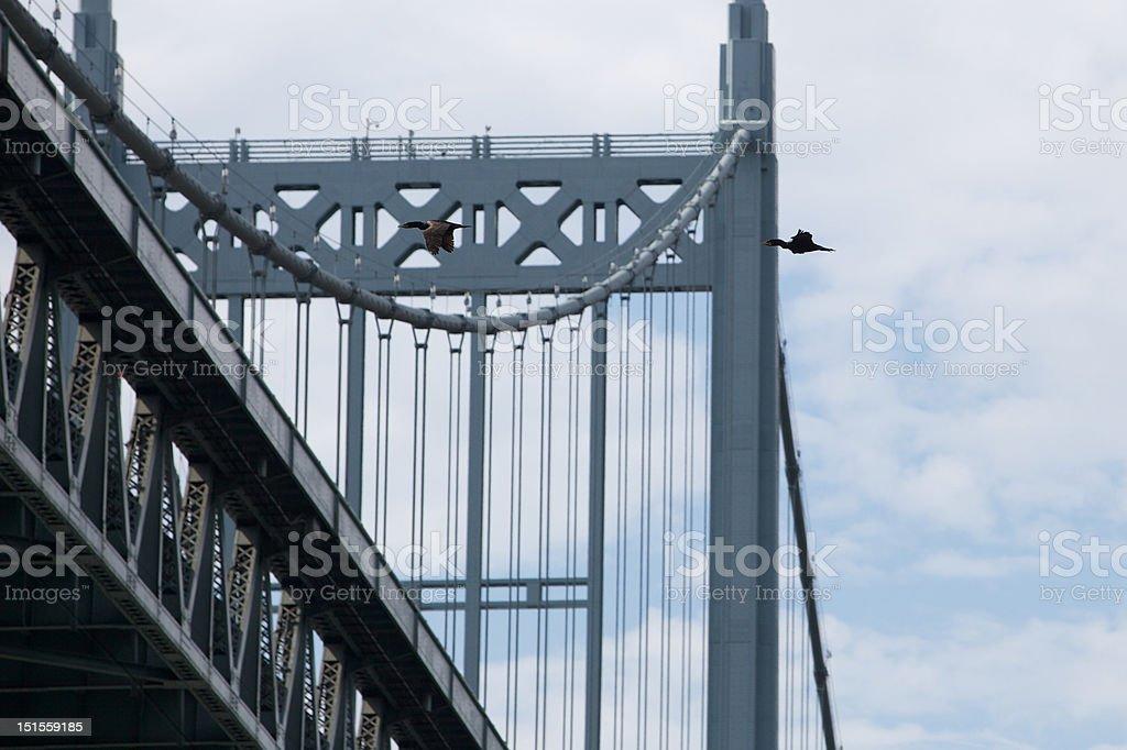 Triborough Bridge with Cormorants stock photo