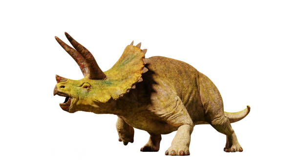 Triceratops horridus dinosaur from the jurassic era picture id868466672?b=1&k=6&m=868466672&s=612x612&w=0&h=3hm8cfcy7ktrmc2qxihpdbfxhlrtu6u 0k nyrlxo2o=