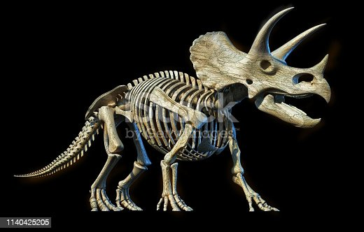 Triceratops skeleton 3d rendering perspective view on black background.