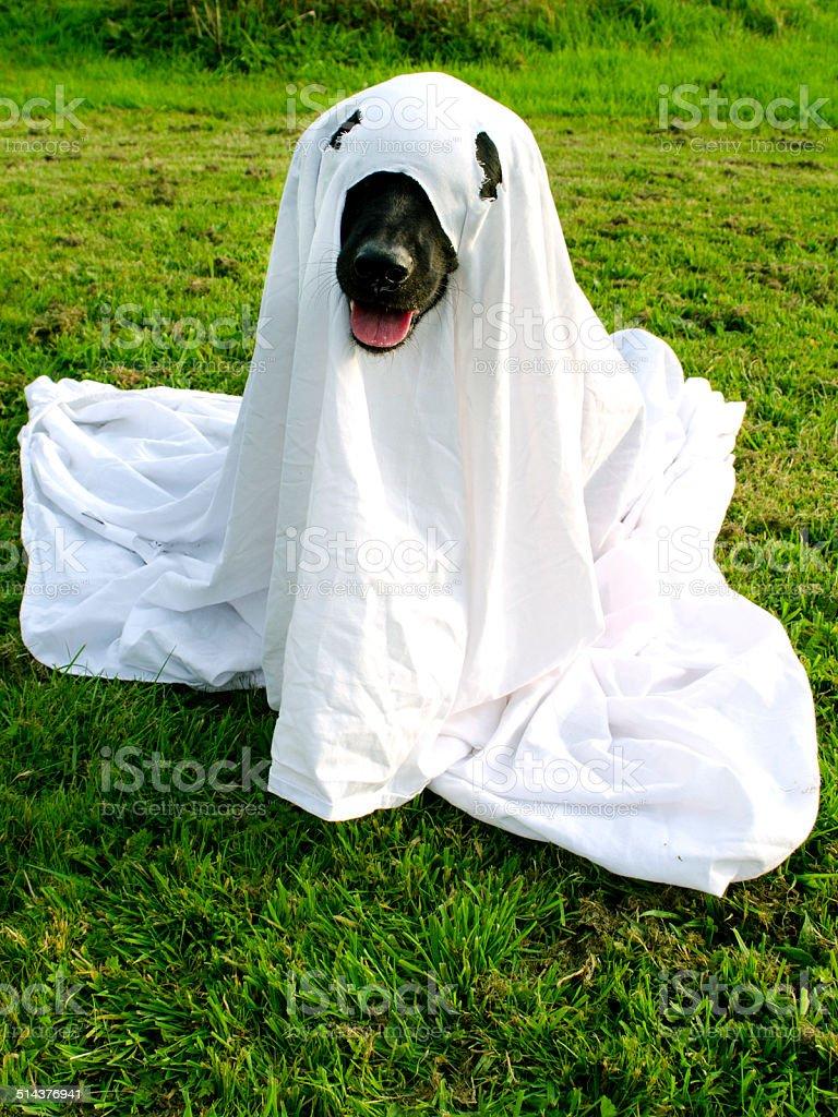Trick or Dog Treat royalty-free stock photo