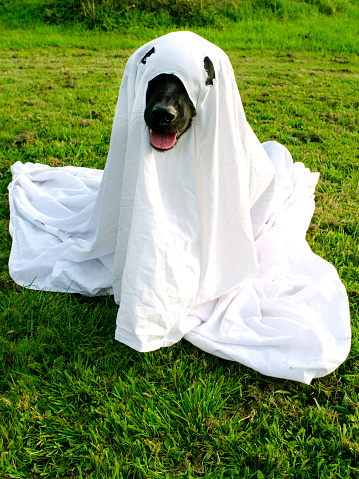 Trick Or Dog Treat Stock Photo - Download Image Now