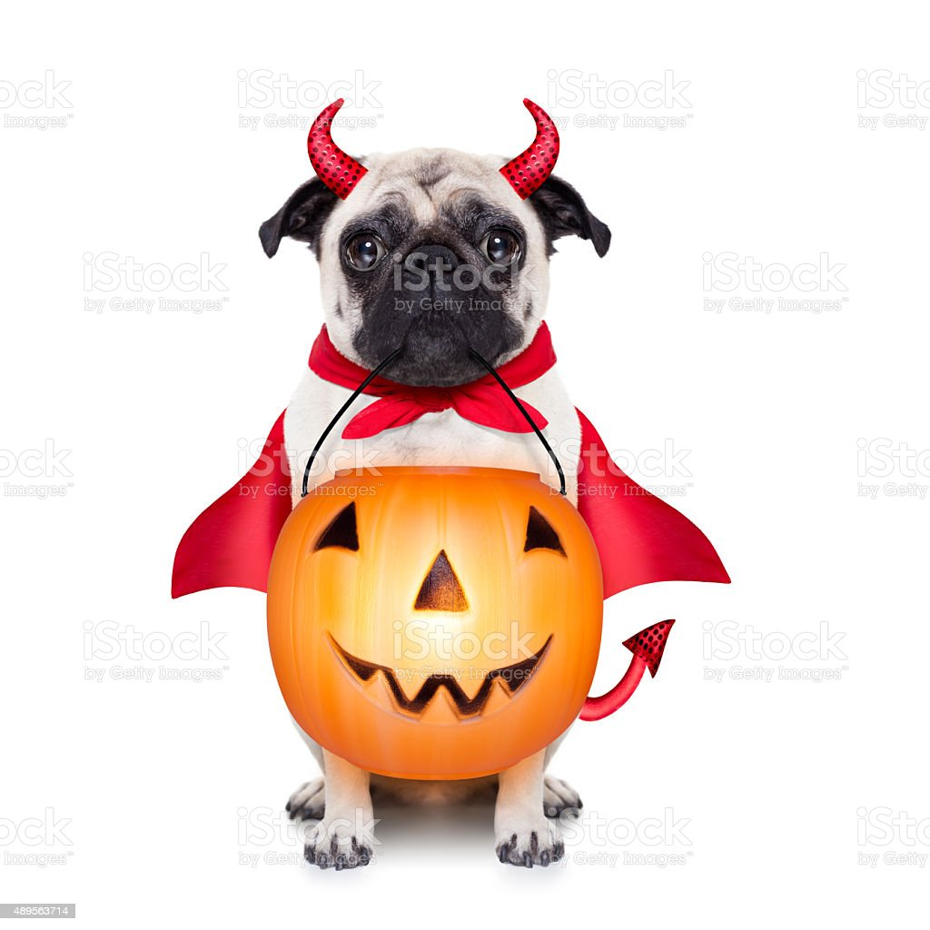 trick or treat dog stock photo
